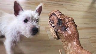 DOG ANNOYED of our pet dinosaur
