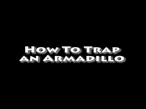 how to keep armadillos out of my yard