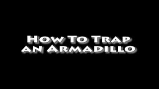 How To Trap An Armadillo