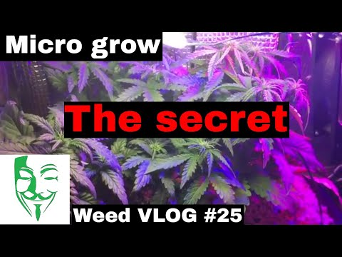 Autoflower Micro grow THE SECRET How to grow in a small space FULL EXPLANATION