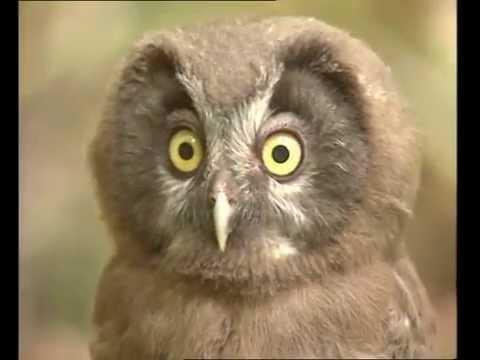 La chouette documentaire animalier youtube - Image de chouette gratuite ...