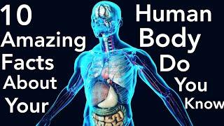 10 Erstaunliche Fakten Über den Menschlichen Körper, die Sie nicht Kennen - Allrounder