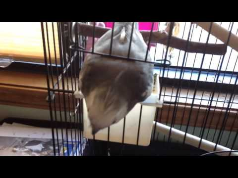 Bird reunited with owner episode 2