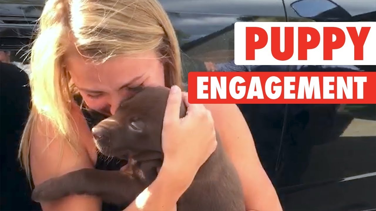 Puppy Proposal | She Said Yes!