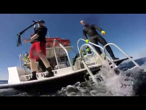 Spearfishing in Panama City February 2016