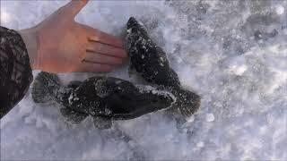 Супер клёв Зимняя ловля ротана Берёт на всё Super cool Huge trophies for winter fishing