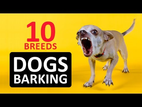 10 DOGS BARKING to Make your Dog Bark HD