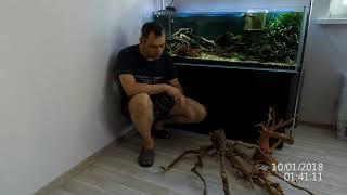 Коряга для аквариума - мой опыт использования