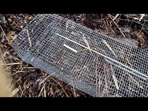 Вопрос: Как сделать клетку для ловли фазана?