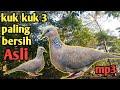 Tekukur Kuk Tiga Burung Tekukur Untuk Pikat Dan Pancing Tekukurgacor Drekukuk Gacor Tekukur  Mp3 - Mp4 Download