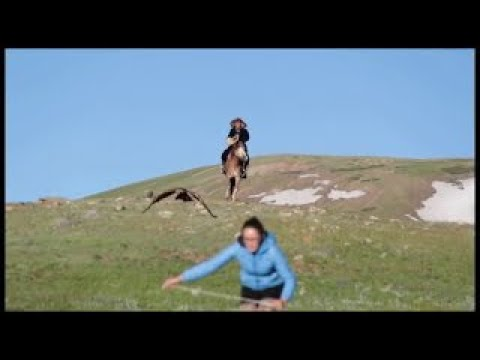 Golden eagle attacking woman in Mongolia