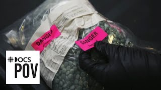 Unstoppable: The Fentanyl Epidemic - Full Length Documentary   Firsthand   CBC