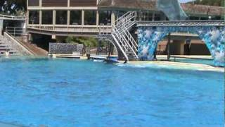 San Diego, Sea World, Killer Whale stunt with a trainer