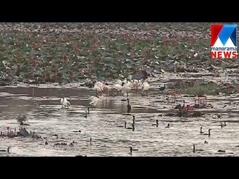 Severe drought hits water supply in Kannur Chirackalchira | Manorama News