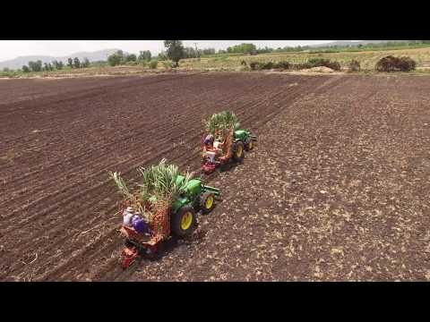 Napier Grass Cultivation 9 - Phantom 3 Pro 4K