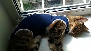 Кошка после операции/ Опять приболела:( Симка и стресс//