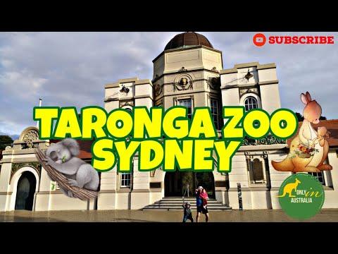TARONGA ZOO SYDNEY | BEST ZOO IN SYDNEY | TOURIST DESTINATION IN AUSTRALIA | AUSTRALIAN ZOO | KOALA