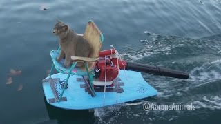 One of AaronsAnimals's most viewed videos: Homemade Jet Ski - Aarons Animals