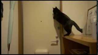 猫がカギを閉める:A cat shuts a key thumbnail