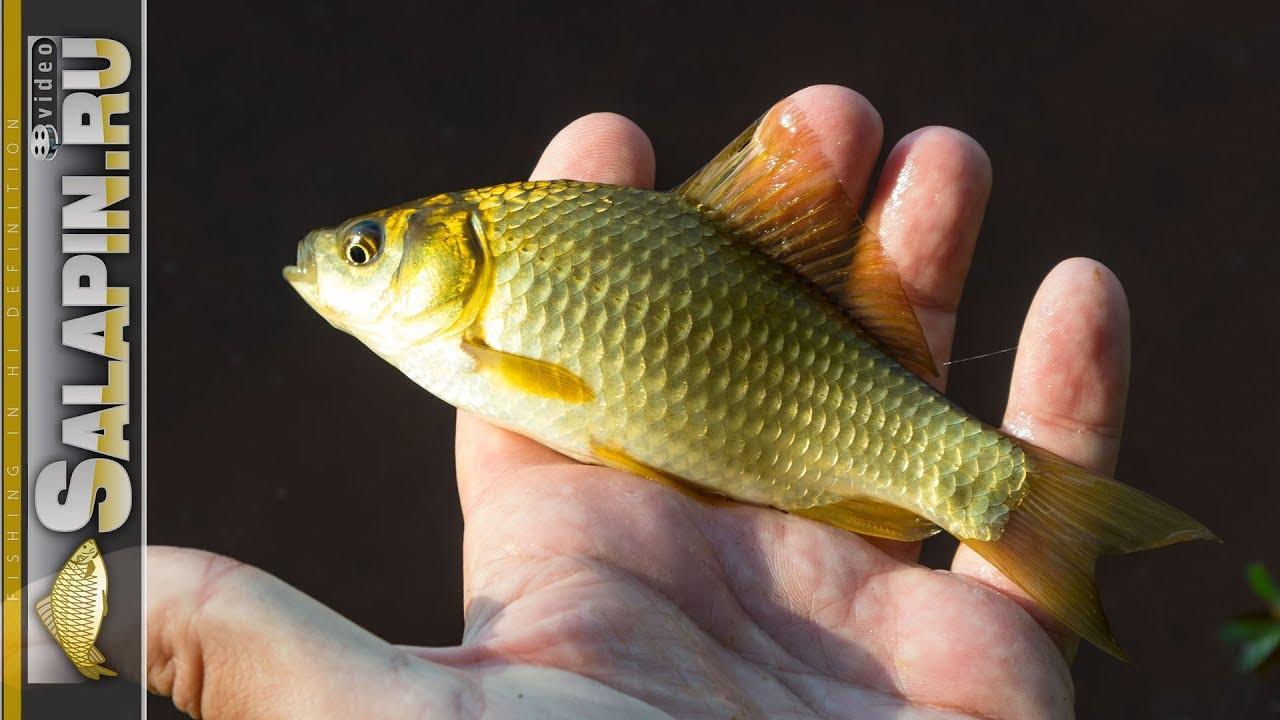 Рыбалка на поплавочную удочку на деревенском пруду (карасики) [salapinru]