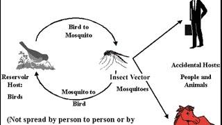 Update on Aseptic Meningitis