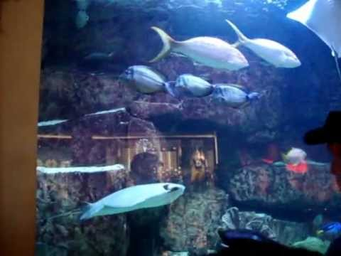 Las Vegas Caesars Palace Fish Opposite Cheesecake Factory