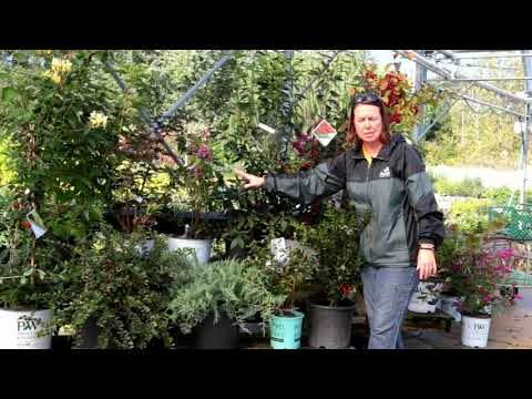 PETITTI Attracting Birds With Berries For Fall And Winter