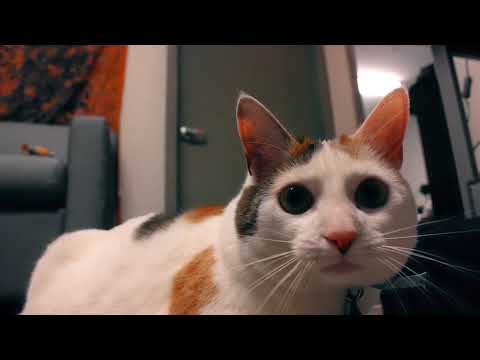 Winter the College Cat Documentary