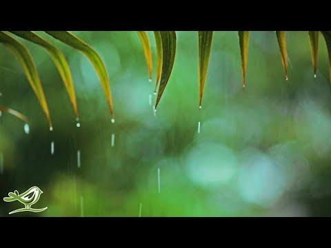 Relaxing Piano Music \u0026 Rain Sounds 24/7