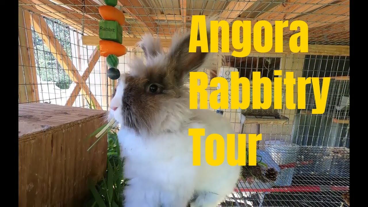 Angora rabbitry in June