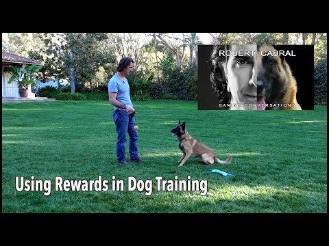 Using Rewards in Dog Training - Robert Cabral Dog Training Video #2