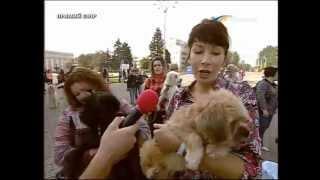 ТК Донбасс - ПИФ - Хозяева для бездомных собак