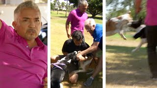 Cesar Millan Races To Break Up A Dog Fight #shorts