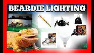Bearded Dragon Lighting Setup Breakdown