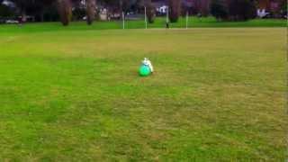 Westie Benji Playing Soccer