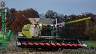 NEW Claas Lexion PreSeries 2015 | Corn Harvest in 12 ROWS Oros !