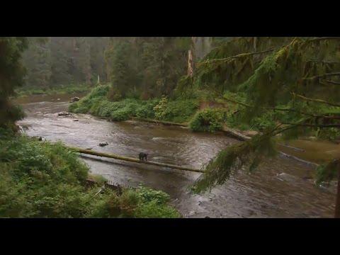 Най-големите гори на Земята - зелените съкровища