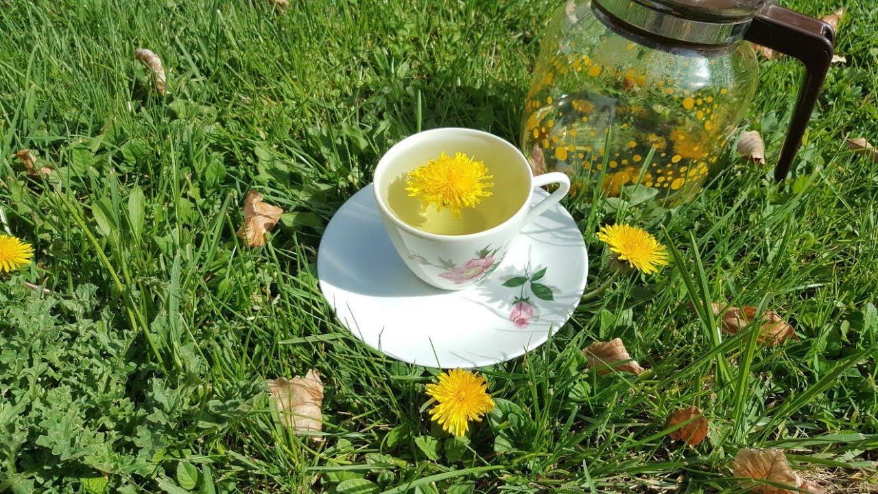 Karahindiba Çayı Faydaları ve Zararları