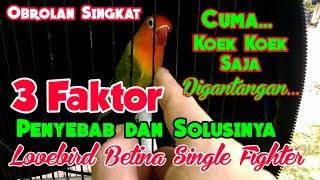 Download lagu Penyebab Dan Solusi Lovebird Betina Single Fighter I Bunyi Cuma Kowek Kowek Saja Ketika Digantangan