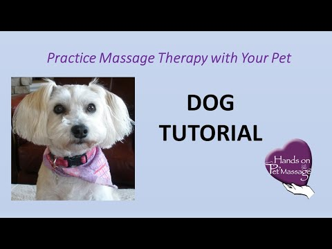 how-to-learn-to-massage-your-dog