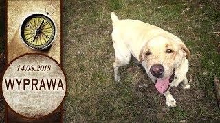 Labrador + las + spacerek + ględzenie właściciela