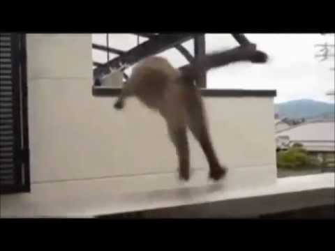 Mission Impossible 5 - Starring Bernie The Cat - In 4D And HI-PAX