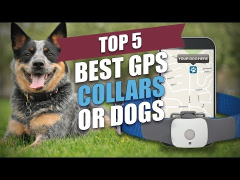 Top 5 Best GPS Collars For Dogs