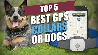 Top 5 Best GPS Collars for Dog…