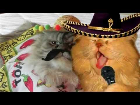 "The Mexican Cat Dance (cover ""El Jarabe Tapatio"")"