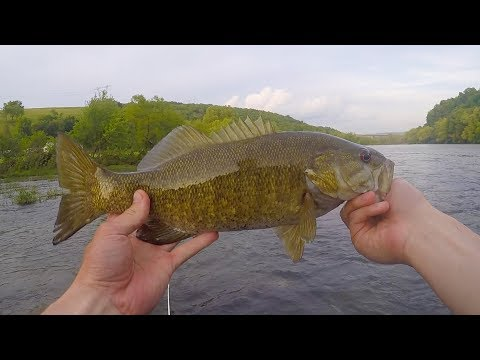 Wade Fishing For Smallmouth Bass On The New River