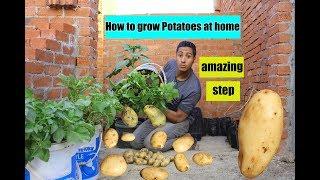 البطاطس طلعنا بنزرعها غلط    لأول مره   فيديو كامل grow potatoes at home