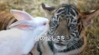 KAT-TUN NEIRO カラオケバージョン