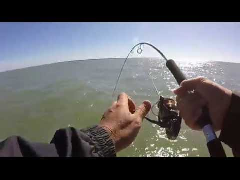 06c96d503d8 Daiwa certate 3012H with Catalina 68S... - YouTube