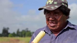 """""""La tierra no te miente"""". Agroecología en la Comunidad Qom Potae Napocna Navogoh"""